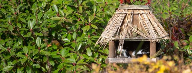 Kat in vogelhuis